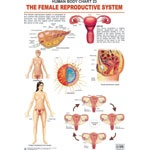 The Female Reproductive System-Chart
