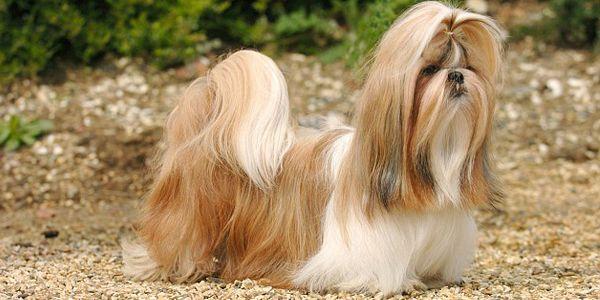 Rottweiler Dog Breeds Rottweiler Rottweiler Puppies