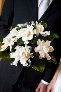 Gardenia bouquet - looks exactly like my wedding bouquet - my favorite flower of all time.