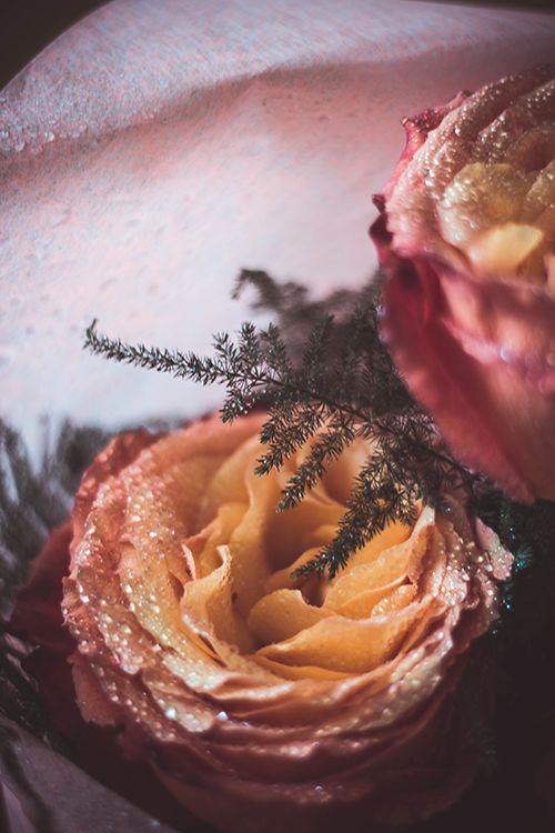 #rose #flower #waterdrops #nature #purple #yellow