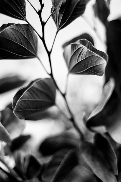 черные листья картинки правильно использовать искусственное