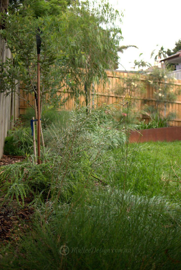 476 best A Native Australian Garden images on Pinterest   Australian ...