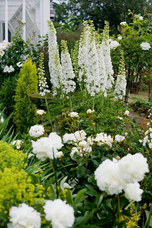 A vignette of white delphinium stalks, peonies, and roses in the Sissinghurst-style white garden behind the farmhouse on this property about one hour north of Seattle in the Skagit Valley.