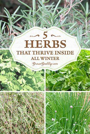 5 Herbs that Thrive Inside All Winter by growagoodlife #Gardening #Winter_Garden #Herbs