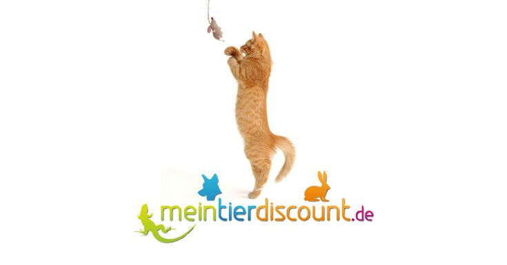 Hier online kaufen! Günstiges Katzenzubehör, Nassfutter & Trockenfutter für Ihre Katze. Kratzbaum, Katzenhalsband, Katzenspielzeug, Katzentoilette, Kissen, Katzengarnitur von Karlie Flamingo, Trixie, Animonda, Whiskas, Hunter Smart für Siam-, Perser, Britisch Kurzhaar, Maine-Coon, Europäisch Kurzhaar und weitere Katzenrassen