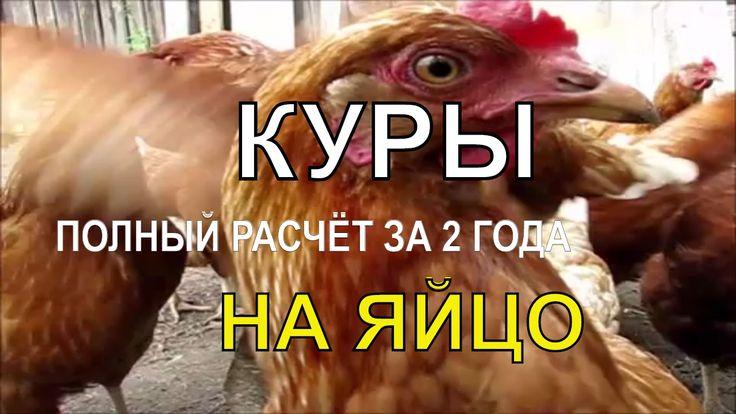 🎥  ☭ ДОХОД ОТ КУР НЕСУШЕК ЗА 2 ГОДА -  Полный Расчёт / Птицеводство