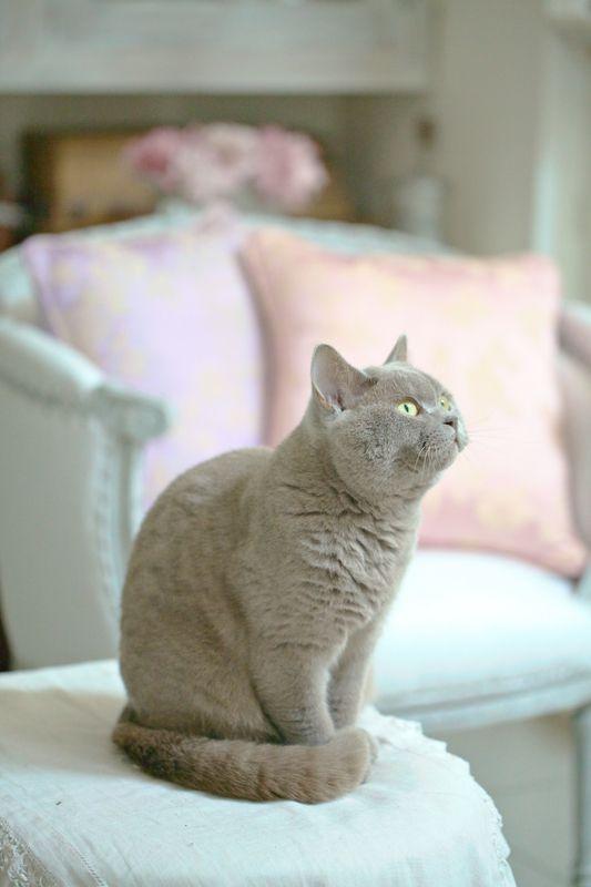 Happy cat via Grange de Charme