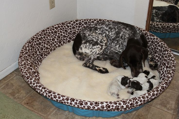 Whelping Pool covers and more for puppy litters | Baby K9