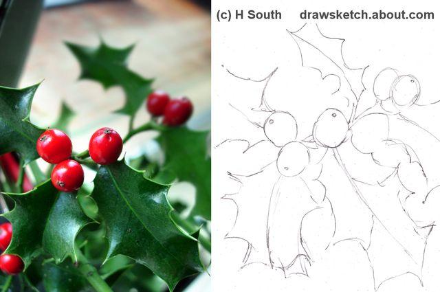 Lernen Sie, eine Holly-Pflanze zu Weihnachten zu zeichnen