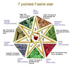 ~This is the Faerie Star also known as The Elven Star, Seven Pointed Star, Septagram, and Heptagram. ~The Faerie Star is a continuously drawn figure having seven points. It is a less common religious symbol than the pentagram, but it is a sacred symbol to witches who follow the Faerie tradition. It has the 7 sacred herbs, with the Apple in the center which is the most sacred of all fruits. It also has the 7 days of the week and the 7 planets.