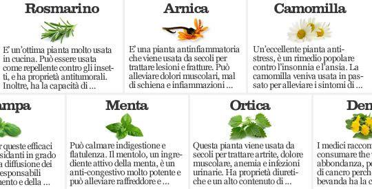 7 piante terapeutiche che curano | Rimedio Naturale