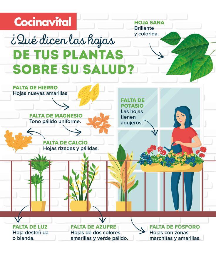 Si observas las hojas de tus plantas y notas alguna anomalia en su color o textura normal, su salud podría estarse deteriorando. ¡Checa cómo solucionarlo! Flowers, Plants, Cactus, Gardens, Molde, Leaf Template, Natural Beauty Tips, Good Day Quotes, Growing Up