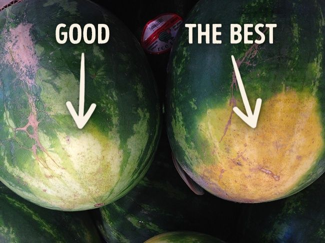 How to pick a perfect watermelon: tips from an experienced farmer                                                                                                                                                                                 More