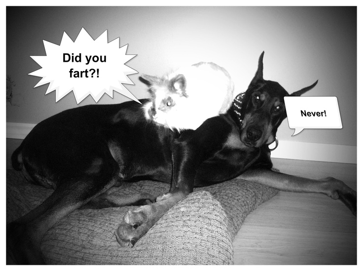 Funny and cute... especially if you own a doberman (you can connect)... oh no! Fobie darts!