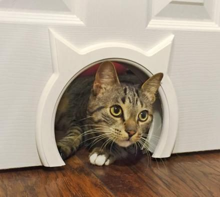 $42. The Kitty Pass: A Kitty Shaped Cat Door Pass
