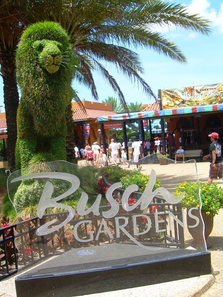Best 25 busch gardens tampa bay ideas on pinterest for Best day go busch gardens tampa