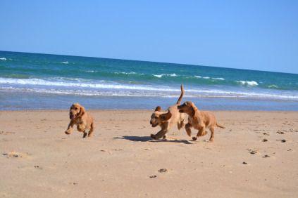 Banksia Park Puppies Beach - 1 of 19