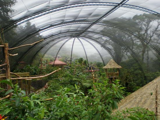 Dream aviary. I imagine there is a waterfall in here somewhere.