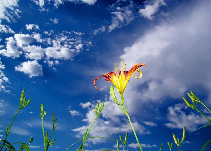 Yılların Yaprak misali döküldüğü, Sevginin eridiği, İnsanın öz değerini yitirdiği şu alemde, Dostluğunu kaybetmemiş nadide insanlara; GÜNAYDIN…