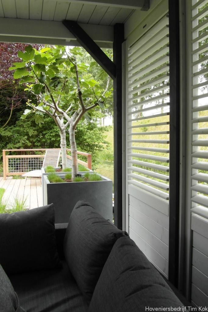 Heerlijk buitenleven, tuin te 's-Gravendeel, shutterschermen- open-structuur-tuinhuis-overkapping-grote-vierkante-bloembakken-in-de-tuin-grijze-bloembak-vierkant-exclusief-luxe-tuinontwerp-tuin-hoveniersbedrijf-timkok