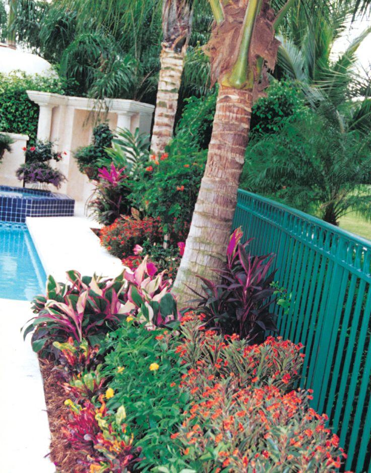 149 Best South Florida Landscaping Images On Pinterest | Florida Landscaping,  South Florida And Landscape Design