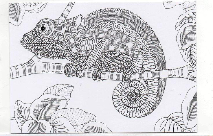 Millie Marotta S Colouring In Card Chameleon Cute