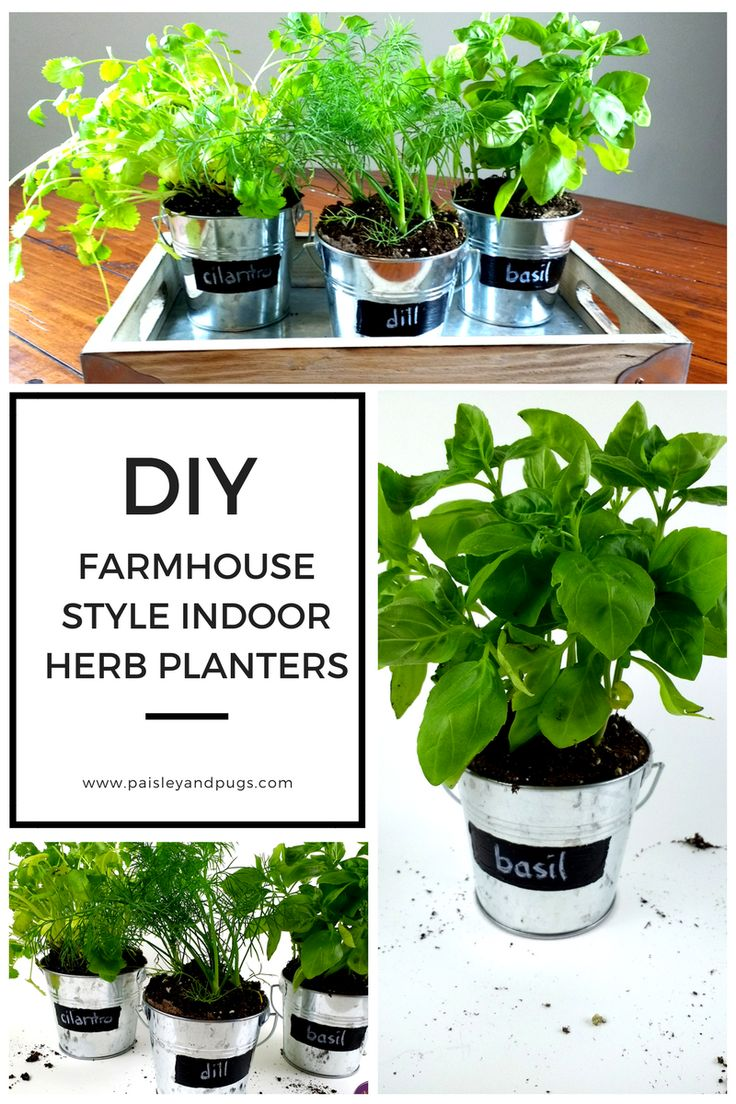 Whip up some farmhouse style by making these galvanized herb planters. Perfect to grow herbs in your kitchen with style. Extensive herb growing guide, too!