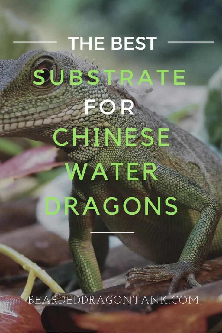 The wrong substrate can kill your pet! Here is what you should use: http://beardeddragontank.com/this-is-the-only-safe-chinese-water-dragon-substrate #chinesewaterdragons #reptilecare #reptiles #animals #pets