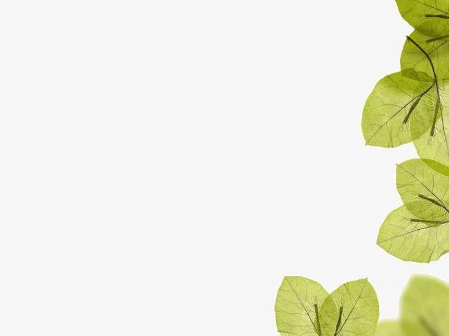 Green Leaf Background Ppt Green Leaf Templates Png Transparent Clipart Image And Psd File For Free Download Green Leaf Background Leaf Background Background Ppt
