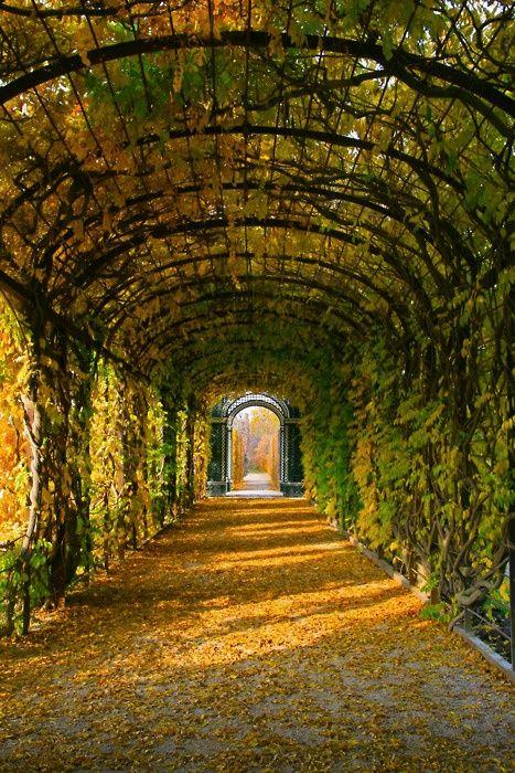 Tree Tunnel, Schonbrunn Gardens, Vienna, Austria Vienna waits for you.