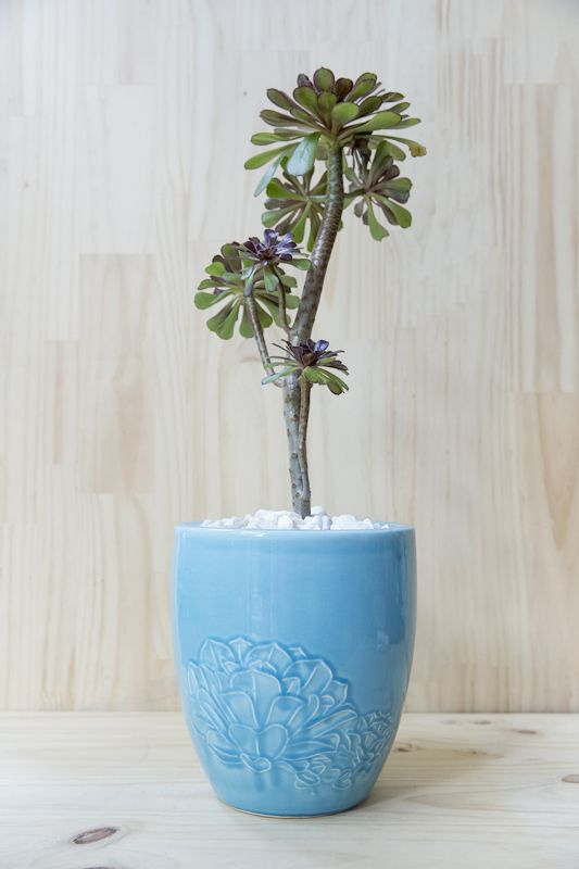 #esmeralda #handmade #planter #ceramic #succulents Shop our products at www.habibiplantitas.com