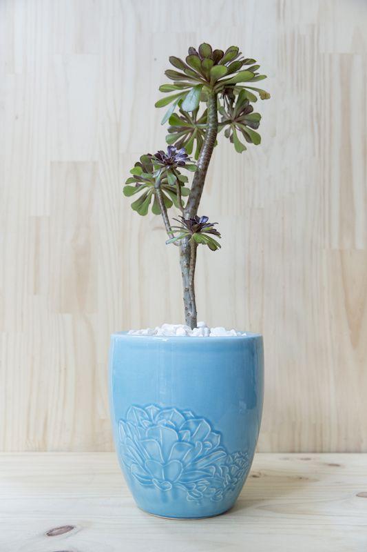 #esmeralda #handmade #planter #ceramic #succulents Shop our products at www.habibiplantitas.com