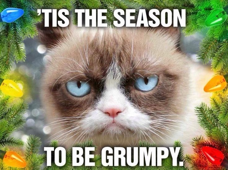 Best 25+ Grumpy cat christmas meme ideas on Pinterest