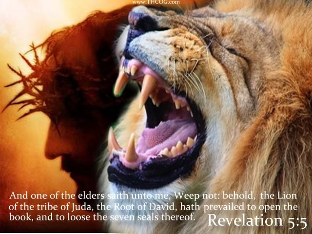 lion of judah | Lion of Judah photo LionofJudah2_zpsbb9ac69b.jpg
