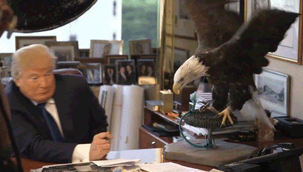 WATCH: Bald Eagle Attacks Donald Trump During Photoshoot Because God Bless America (GIFs)