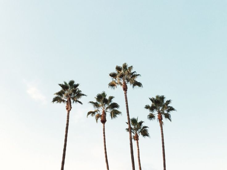 Palm trees | Nick Le | VSCO