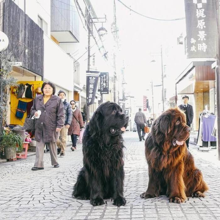 12 снимков большой дружбы маленького мальчика и гигантских собак