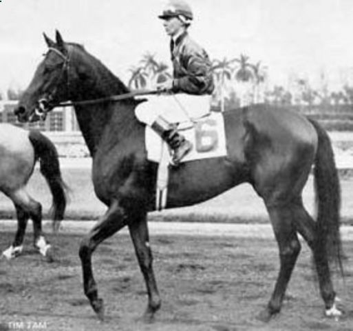 Tim Tam(1955)Tom Fool- Two Lea By Bull Lea. 3x3 To Bull Dog. 14 Starts 10 Wins 1 Second 2 Thirds. Won 1958 Kentucky Derby (G1) And Preakness(G1). Was Leading Belmont In Last 1/16 When He Snapped Sesamoid Bone And Ended Up Running Second. Retired And Went On To Successful Stud Career.