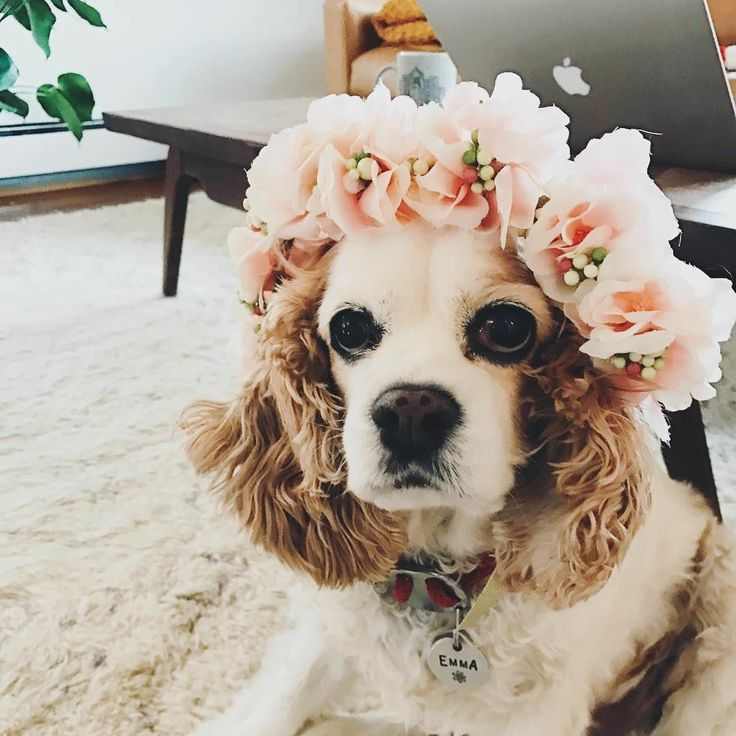 Excited to share the latest addition to my #etsy shop: Dog Flower Collar, dog flower wreath, pet accessory, pet friendly wedding, flower girl dog, ring bearer dog, dog of honor, best dog, wedding http://etsy.me/2yqI2AU