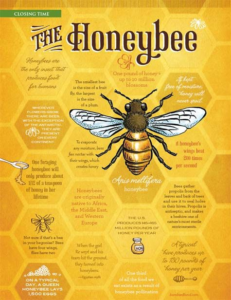 ♥♥The Honeybee♥♥                                                                                                                                                                                 More