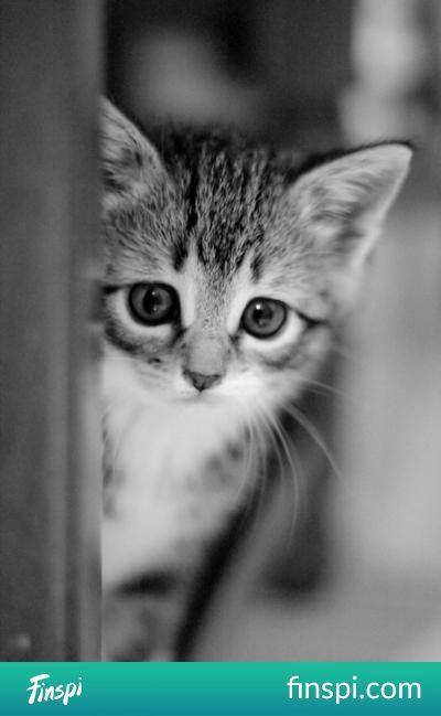 kociak #zwierzęta #koty #pupile