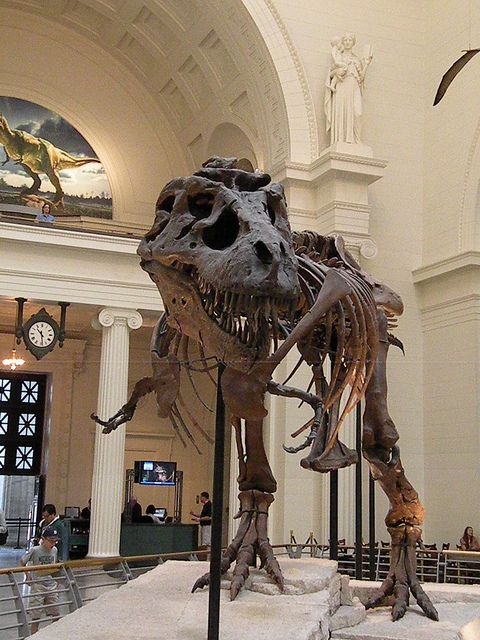 Field Museum of Natural History  Chicago, IL  Perhaps the most famous non-fictional T-Rex:  Sue!