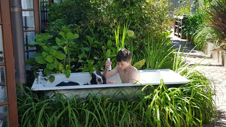 My son Bruce giving Harry the basset, a bath in the gardens at 9 Fern Rest Guest House