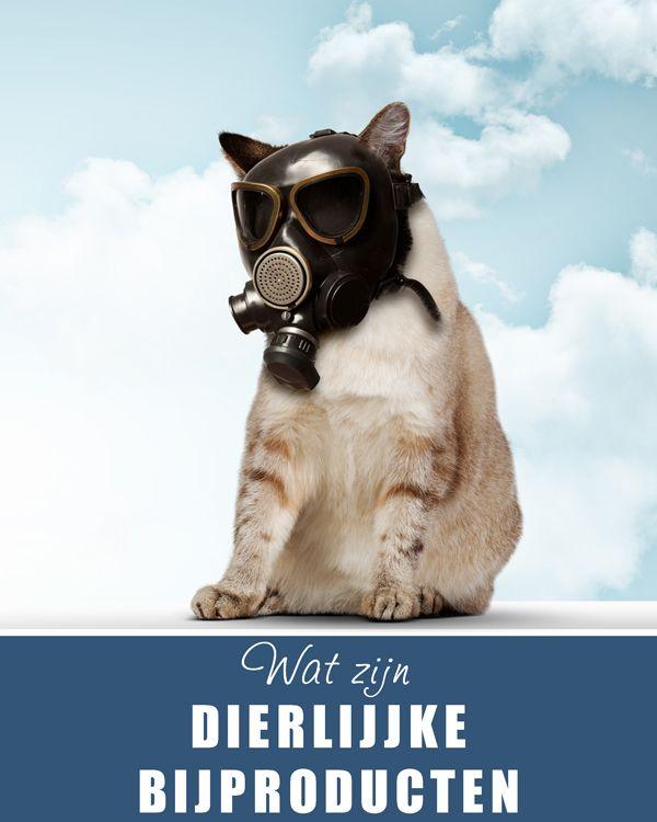 Wat zijn dierlijke bijproducten in het #kattenvoer? www.voervoorkatten.nl