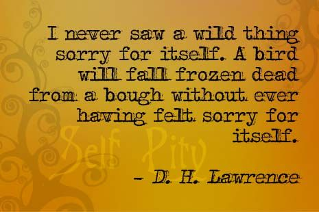 I never saw a wild thing sorry for itself. A bird will fall frozen dead from a bough without ever having felt sorry for itself. ~ D. H. Lawrence