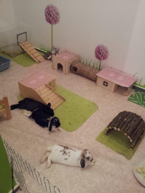 Wall idea for my rabbits