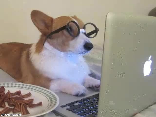 Este Corgi lee las noticias sobre la OMS y el bacon