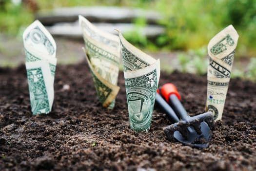 Das Geld liegt im Garten! Selber anbauen ist oft günstiger, als Bio-Gemüse zu kaufen.