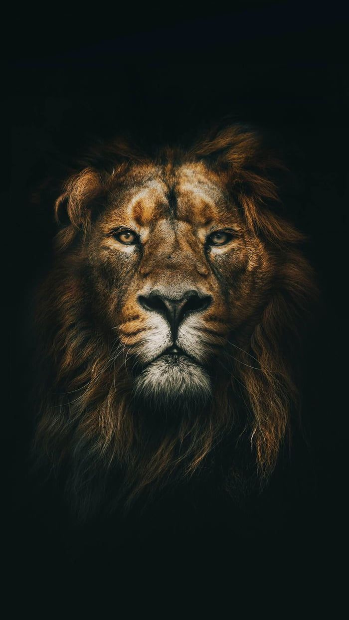 King of the Jungle – Project – #des #Dschunge …