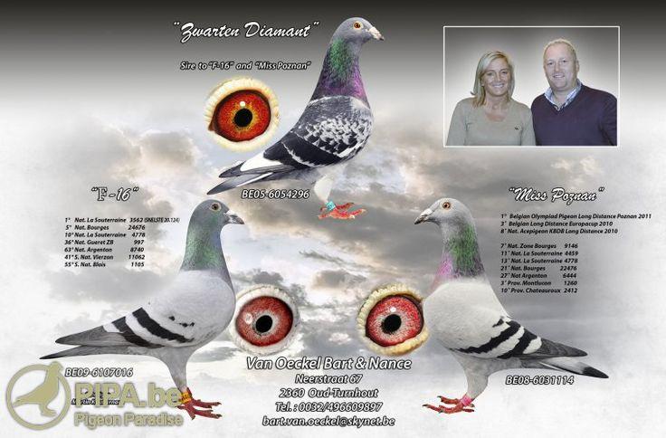 """Képtalálat a következőre: """"bart & nance van oeckel duiven"""""""